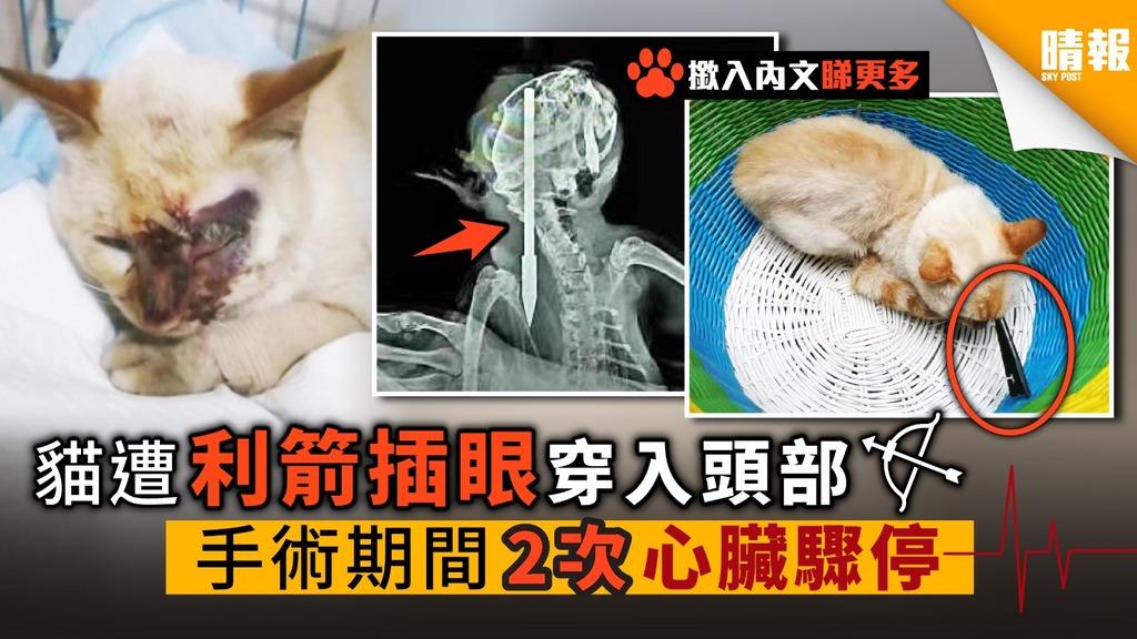 貓遭利箭插眼 穿入頭部 手術期間 2次心臟驟停