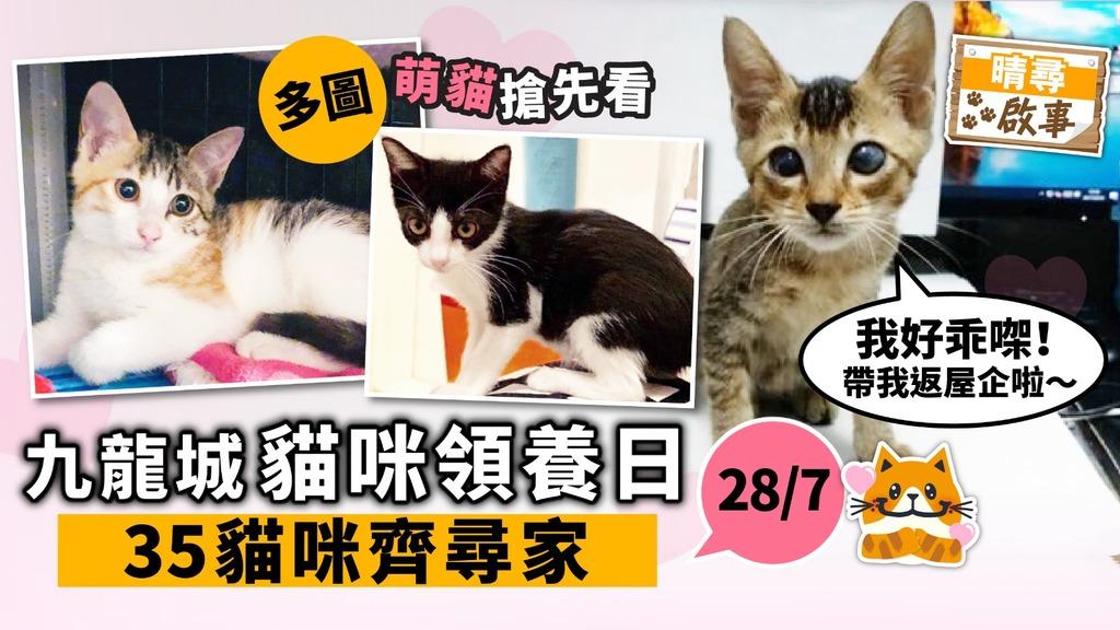 【晴尋啟事】九龍城周日領養日 35隻貓咪齊尋家 23隻超萌貓搶先睇