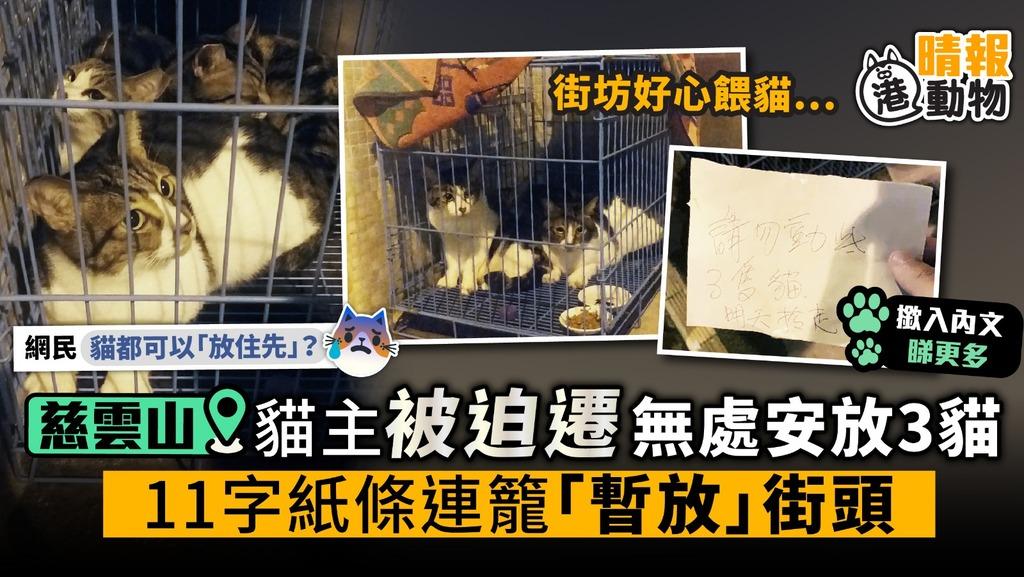 貓主被迫遷無處安放3貓 11字紙條連籠「暫放」慈雲山街頭