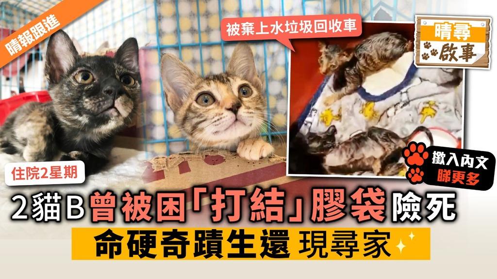 2貓B曾被困「打結」膠袋險死 命硬奇蹟生還 現尋領養