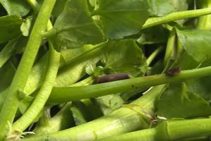【菜蟲】農夫拆解最多菜蟲蔬菜排行榜  大廚教你徹底洗淨常見蔬菜方法