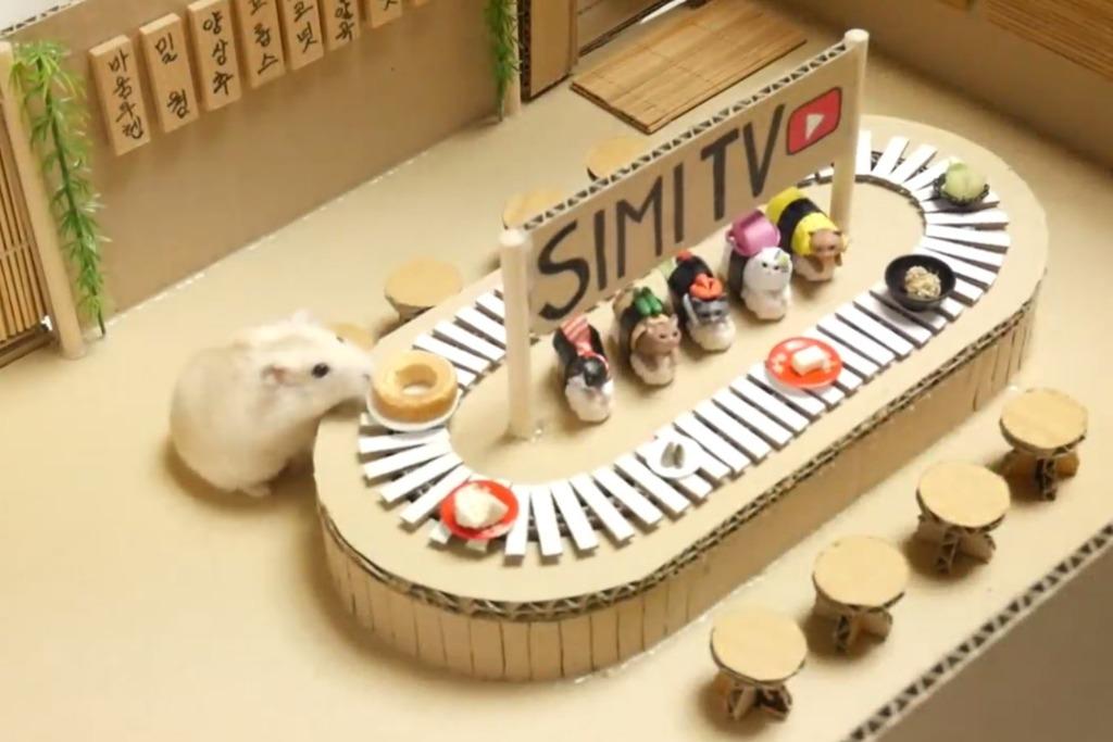 韓國主人為倉鼠打造多個玩樂場所 日式迴轉壽司放題/戲院食爆谷