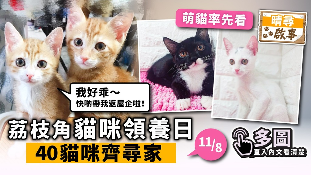 【晴尋啟事】荔枝角周日領養日 40隻貓咪齊尋家 超萌貓搶先睇
