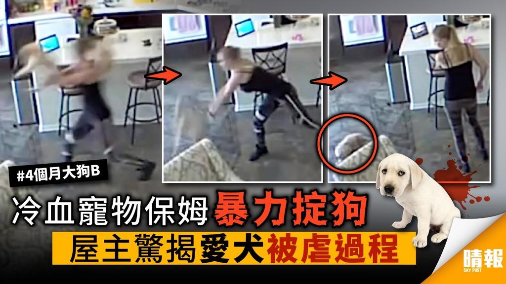 【內有影片】冷血保姆暴力掟狗 屋主驚揭愛犬被虐過程