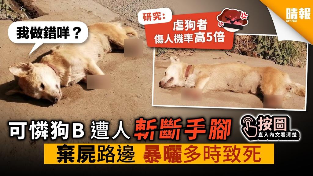 可憐狗B遭人斬斷手腳 棄屍路邊 暴曬多時致死