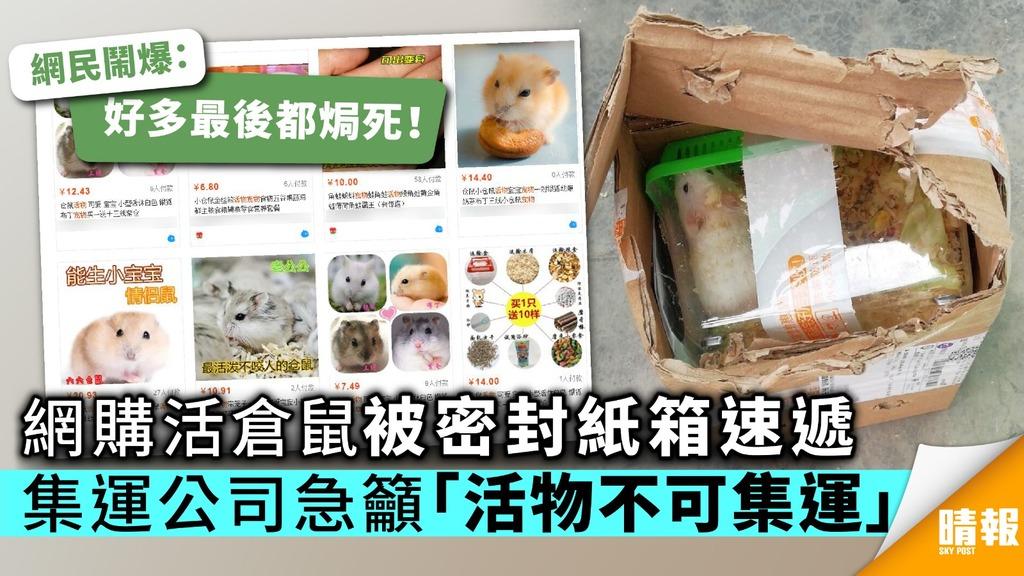 網購活倉鼠放密封紙箱速遞 集運公司急籲「活物不可集運」
