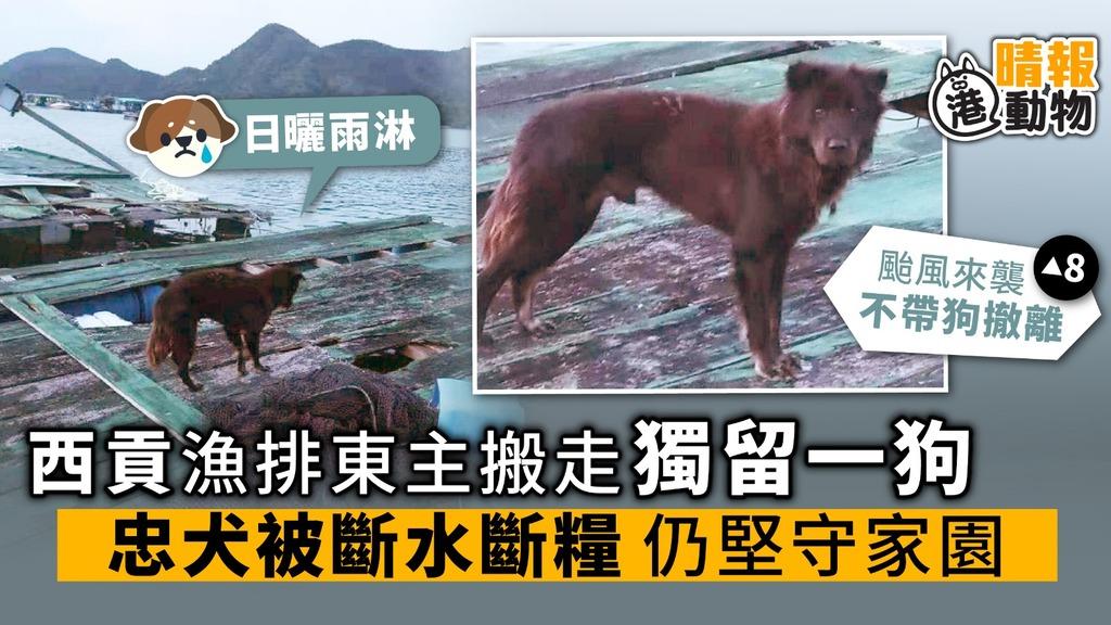西貢漁排東主撤走 獨留一狗 忠犬被斷水斷糧 仍堅守家園