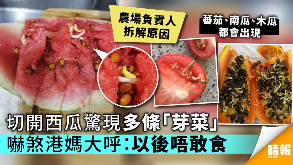 【附專家拆解】切開西瓜驚現多條「芽菜」 嚇煞港媽大呼:以後唔敢食