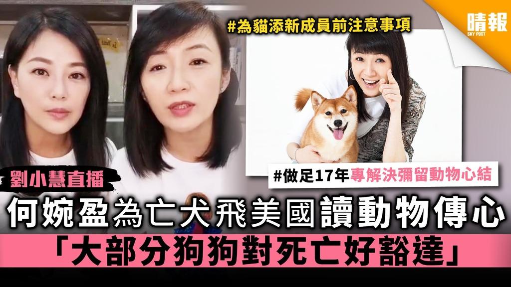 【劉小慧直播】何婉盈為亡犬飛美國讀動物傳心 「大部分狗狗對死亡好豁達」