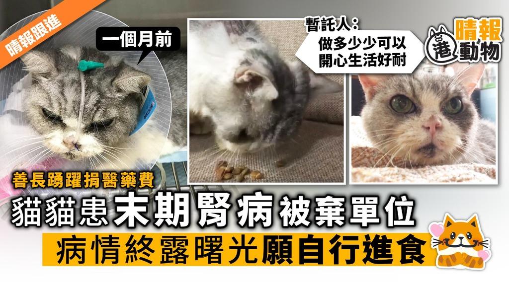 貓貓患末期腎病被棄單位 病情終露曙光願自行進食