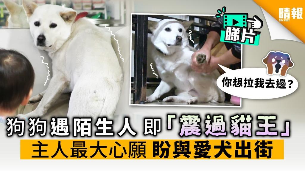 【內附影片】狗狗遇陌生人 即「震過貓王」 主人最大心願 盼與愛犬出街
