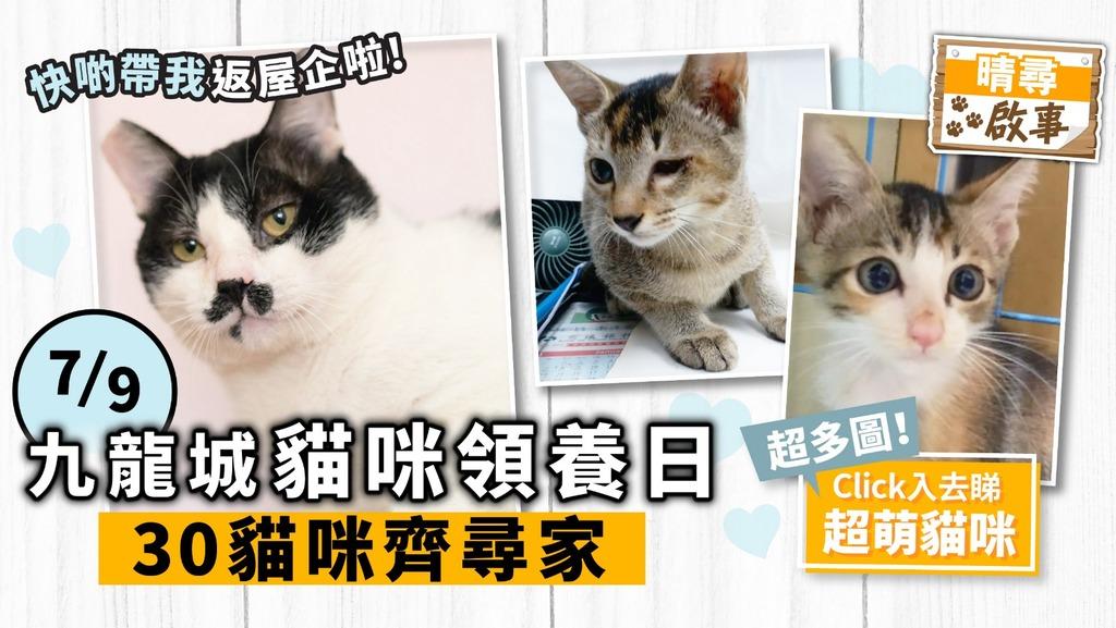 【晴尋啟事】九龍城周六領養日 30隻貓咪齊尋家 超萌貓搶先睇