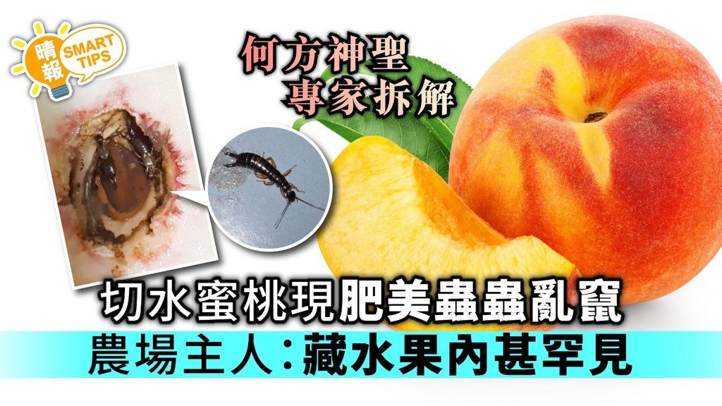 【Smart Tips】切水蜜桃現肥美蟲蟲亂竄 農場主人:藏於水果內甚罕見【專家拆解】