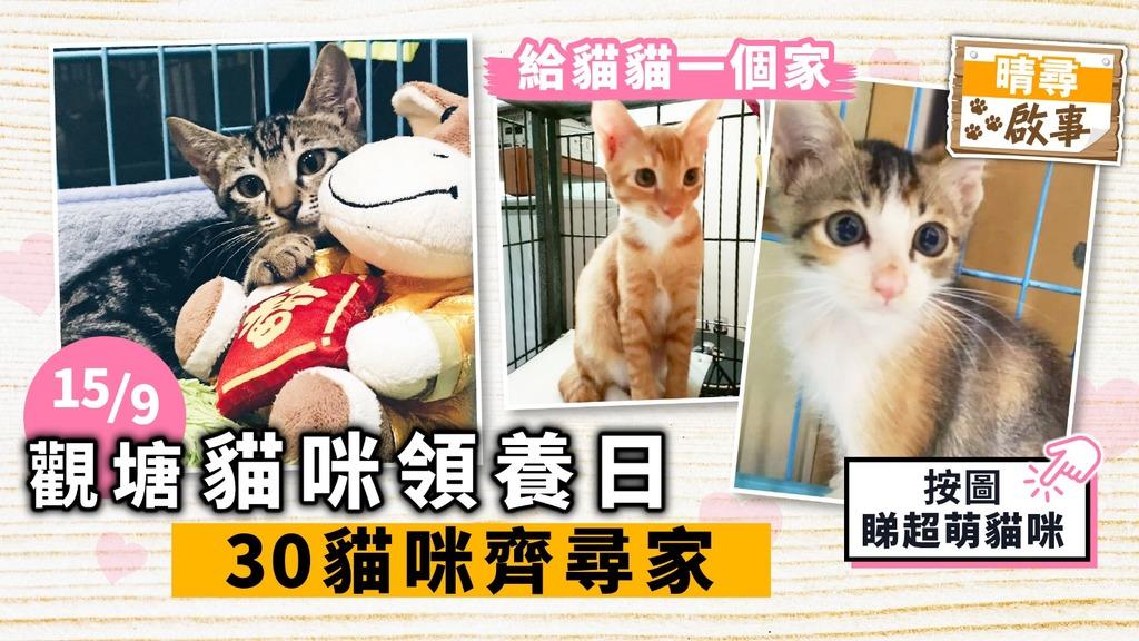 【晴尋啟事】觀塘貓咪周日領養日 30隻貓咪齊尋家 超萌貓搶先睇