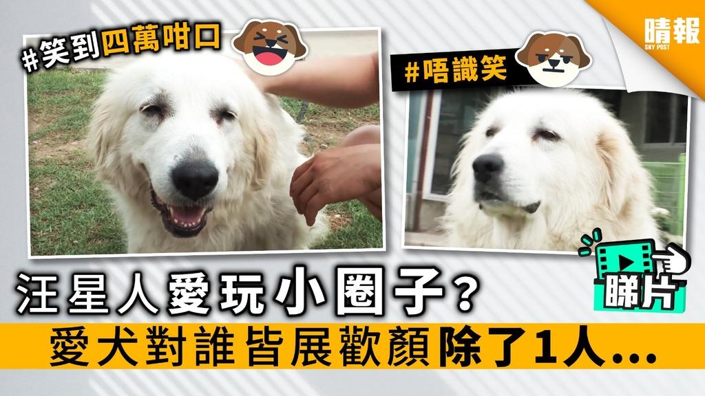 【內附影片】汪星人愛玩小圈子? 愛犬對誰皆展歡顏 除了1人…