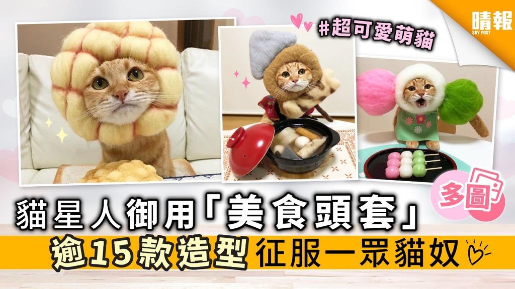 【內有多圖】貓星人御用 「美食頭套」 逾16款造型 征服一眾貓奴