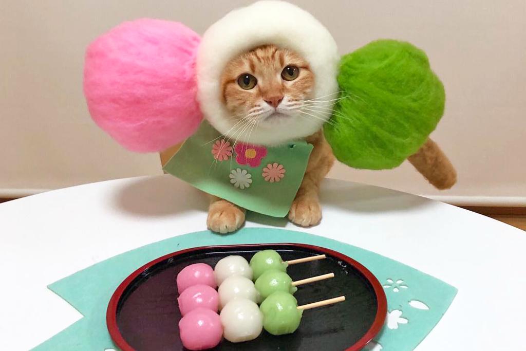 日本可愛貓貓百變造型收服貓奴心! Meow Meow扮壽司師傅/日式糰子/天婦羅/鯛魚燒
