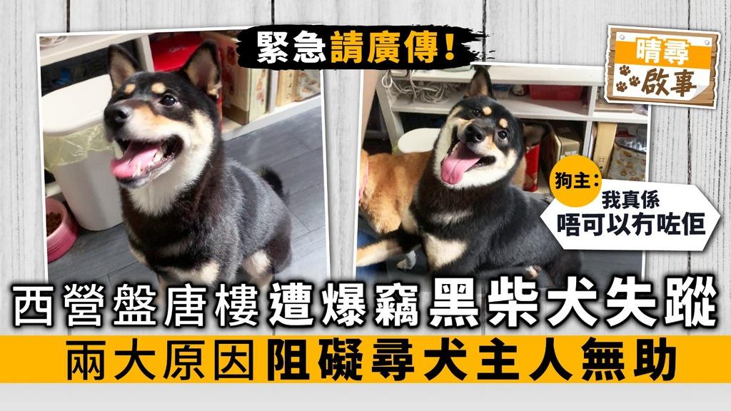 (已尋回)【晴尋啟事】西營盤唐樓遭爆竊黑柴犬失蹤 兩大原因阻礙尋犬主人無助