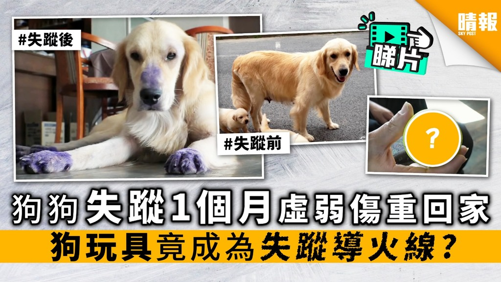 【內附影片】狗狗失蹤1個月 虛弱傷重回家 狗玩具 竟成為 失蹤導火線?