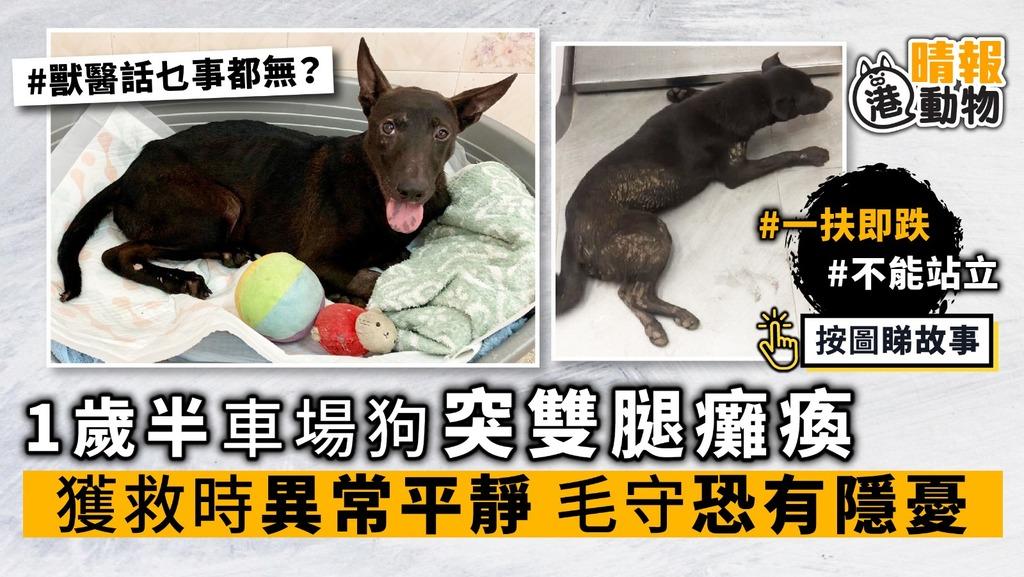 1歲半車場狗 突雙腿癱瘓 獲救時異常平靜 毛守恐有隱憂