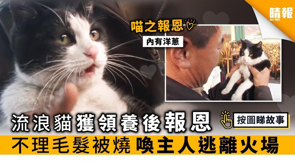 流浪貓獲領養後報恩 不理毛髮被燒 喚主人逃離火場