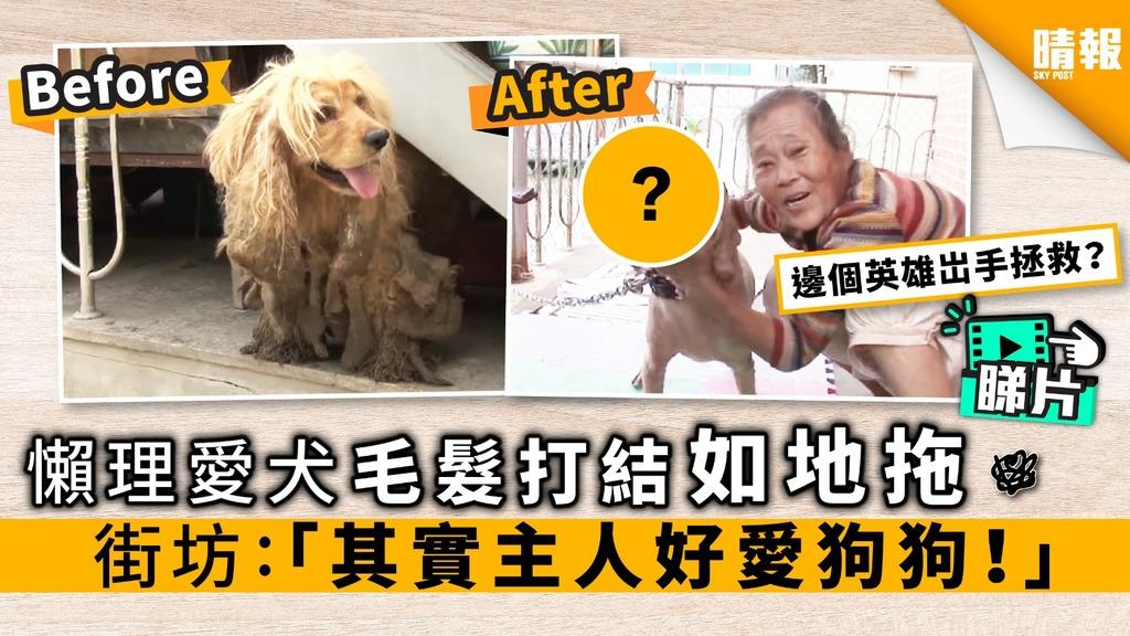 【內附影片】懶理愛犬毛髮打結如地拖 街坊:其實狗主好愛狗狗