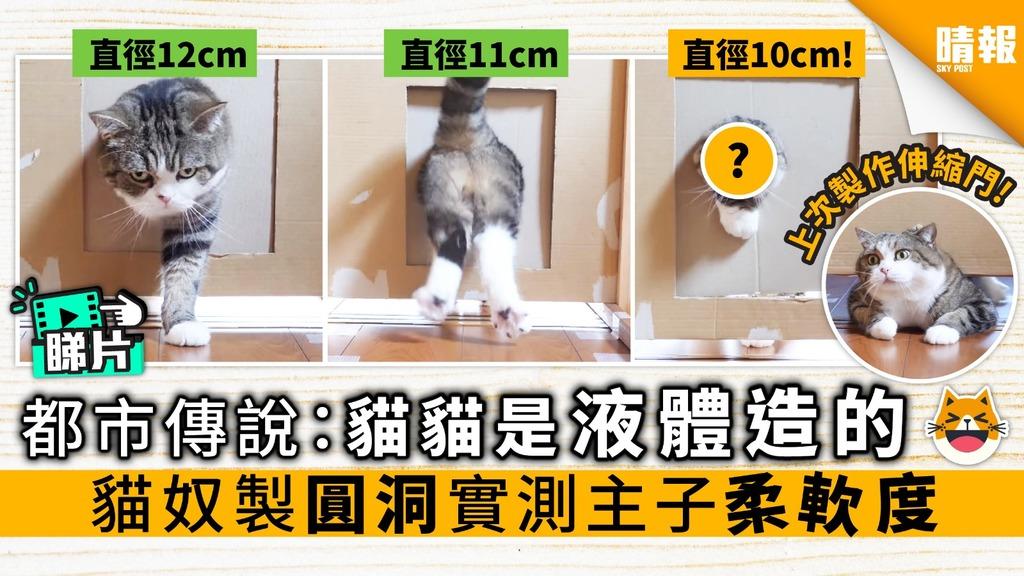 【內有影片】都市傳說:貓貓是液體造的 貓奴製圓洞實測主子柔軟度