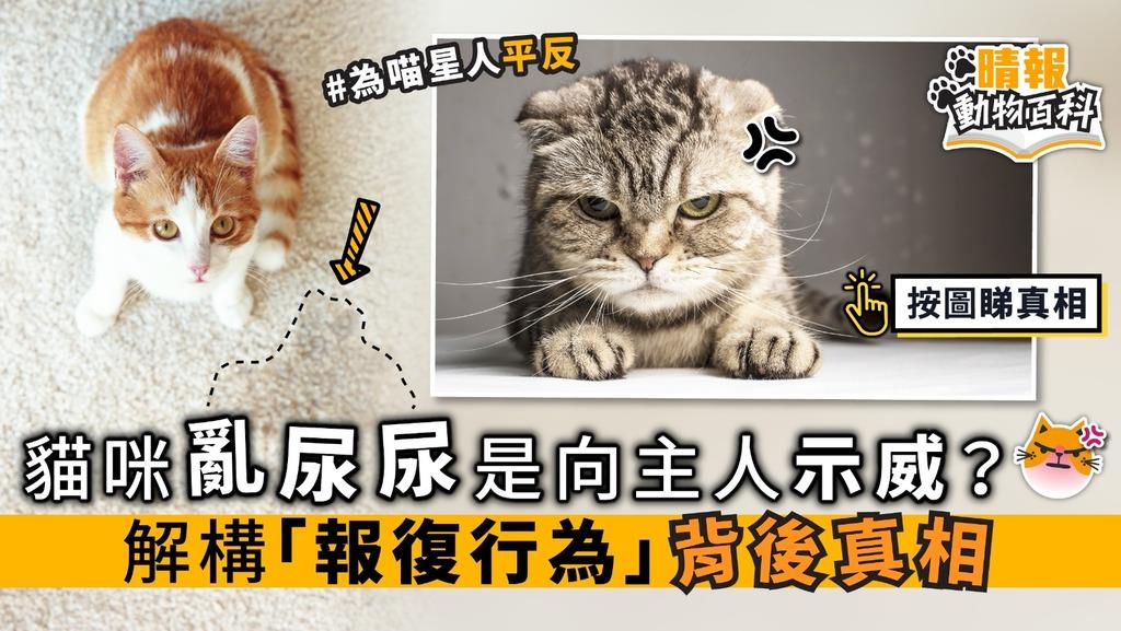 【晴報動物百科】貓咪亂尿尿 是向主人「示威」? 解構「報復行為」背後真相