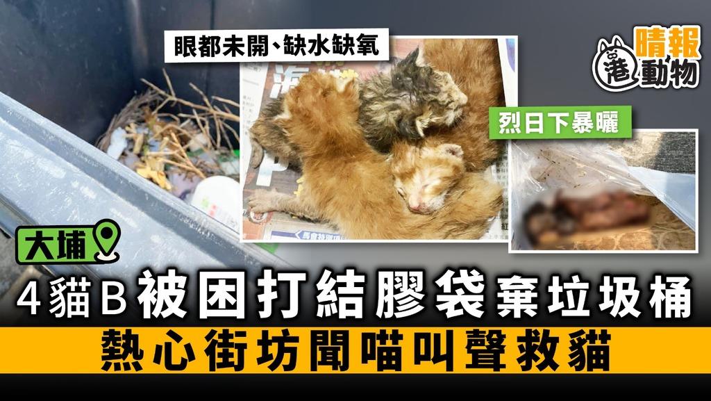 大尾篤4貓B被困打結膠袋 棄垃圾桶 熱心街坊聞喵叫聲救貓