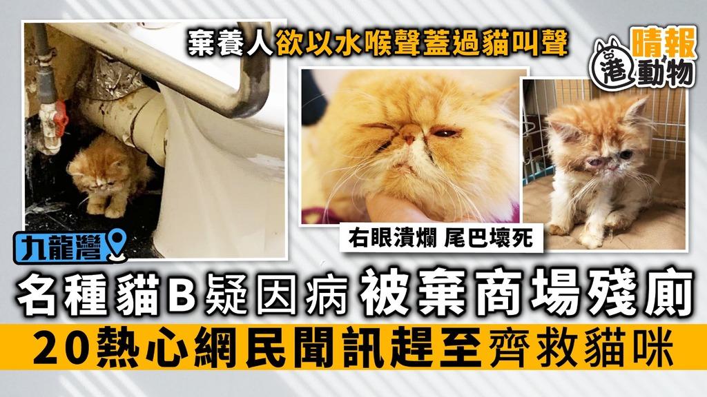 異短貓B疑因病 被棄商場殘廁 20熱心網民聞訊趕至 齊救貓咪