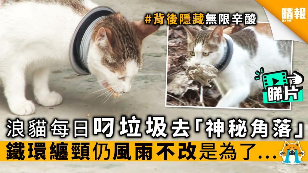 【內附影片】浪貓每日叼垃圾 去「神秘角落」 鐵環纏頸仍風雨不改 是為了…
