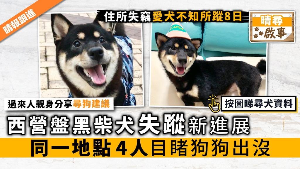 (已尋回)【晴尋啟事】西營盤黑柴犬失蹤新進展 同一地點4人目睹狗狗出沒