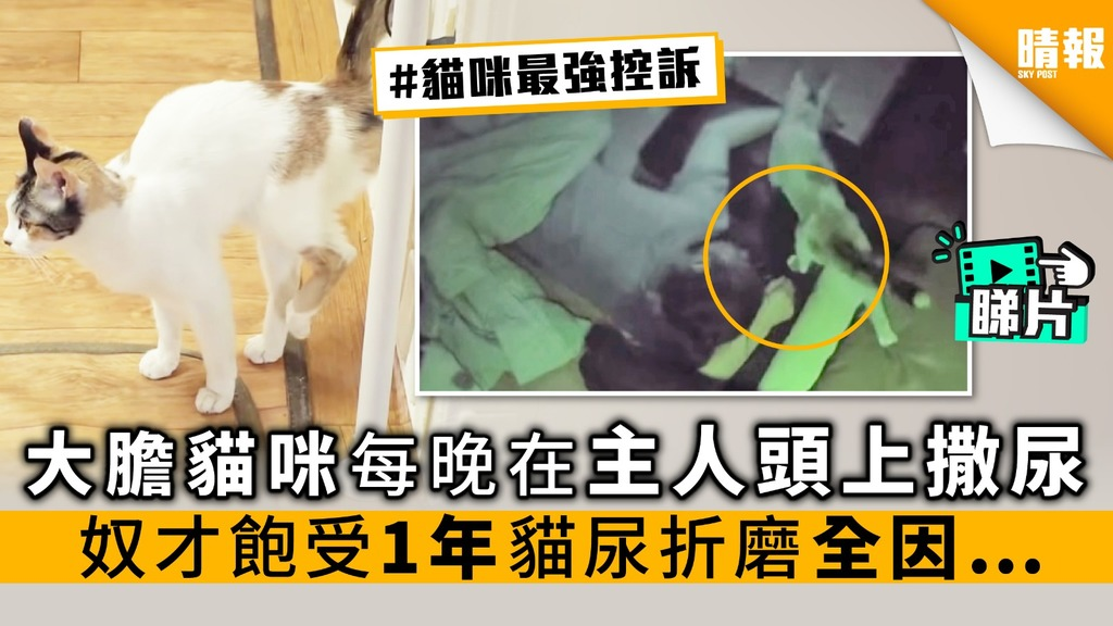 【內附影片】大膽貓咪 每晚在主人頭上撒尿 奴才飽受1年貓尿折磨 全因…