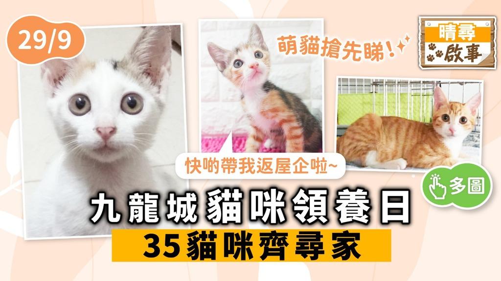【晴尋啟事】九龍城周日領養日 35隻貓咪齊尋家 超萌貓搶先睇