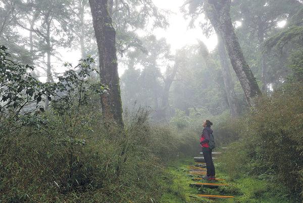 宜蘭太平山 漫步全球最美山徑