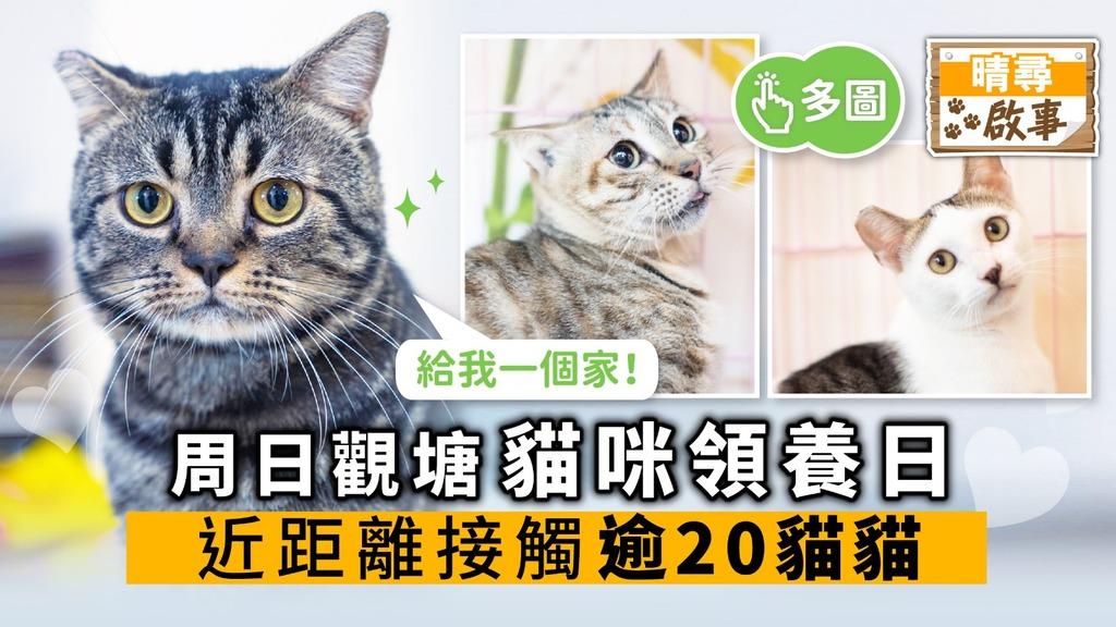 【晴尋啟事】周日觀塘貓咪領養日 近距離接觸逾20貓貓