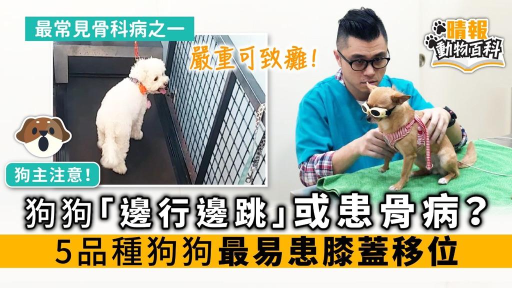 狗狗「邊行邊跳」或患骨病? 5品種狗狗最易患膝蓋移位