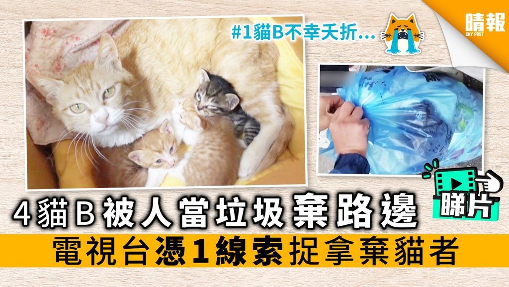 【內附影片】4貓B被人當垃圾棄路邊 電視台憑1線索 捉拿棄貓者