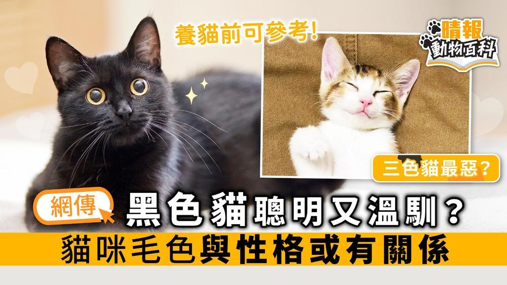 黑色貓聰明又溫馴? 貓咪毛色與性格或有關係