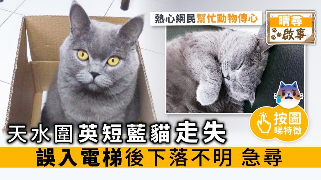 【晴尋啟事】天水圍英短藍貓走失 誤入電梯後下落不明 急尋