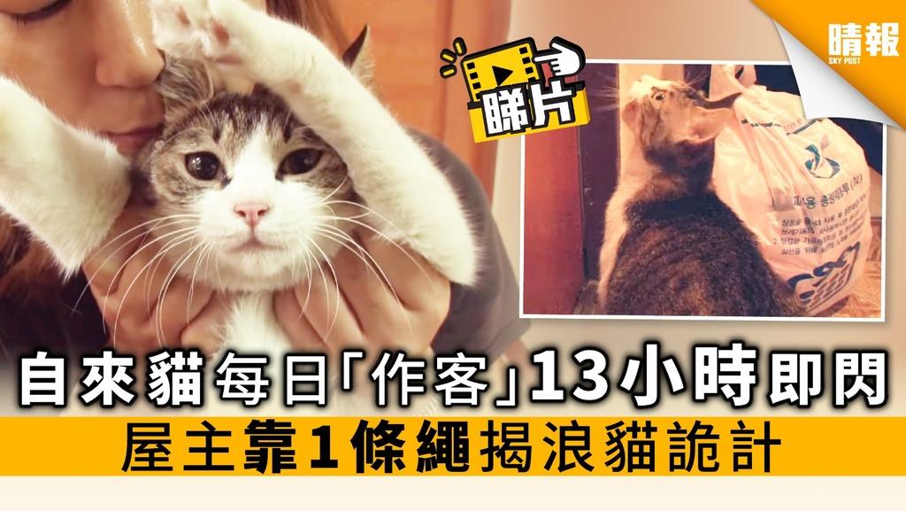 【內附影片】自來貓每日「作客」13小時即閃 屋主靠1條繩 揭浪貓詭計