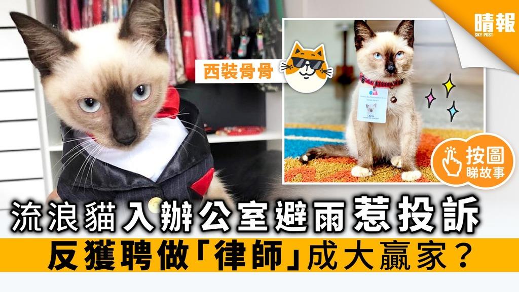 流浪貓入辦公室避雨惹投訴 反獲聘做「律師」成贏家?