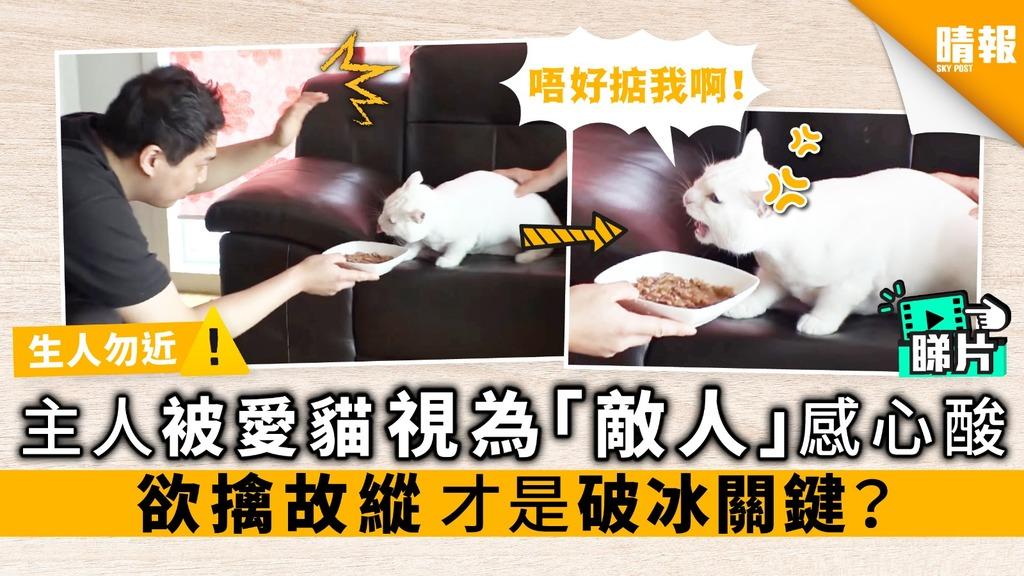 【內附影片】主人被愛貓視為「敵人」感心酸 欲擒故縱 才是破冰關鍵?
