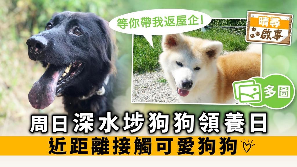 【晴尋啟事】周日深水埗狗狗領養日 近距離接觸可愛狗狗