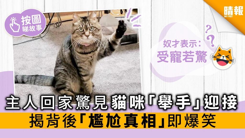 主人回家驚見貓咪「舉手」迎接 揭背後「尷尬真相」即爆笑