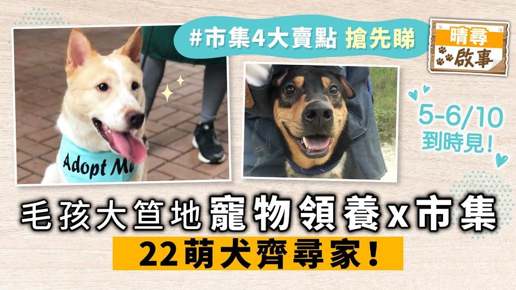 毛孩大笪地 寵物領養x市集 22萌犬齊尋家