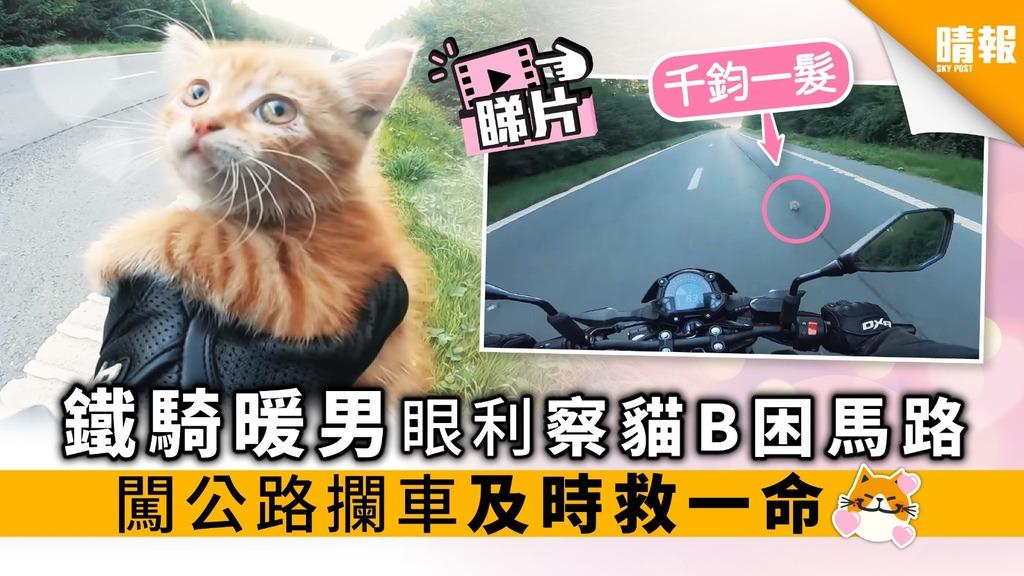 鐵騎暖男眼利察貓B困馬路 闖公路攔車及時救一命