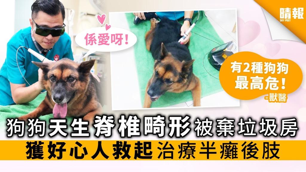 狗狗天生脊椎畸形 被棄垃圾房 獲好心人救起 治療半癱後肢