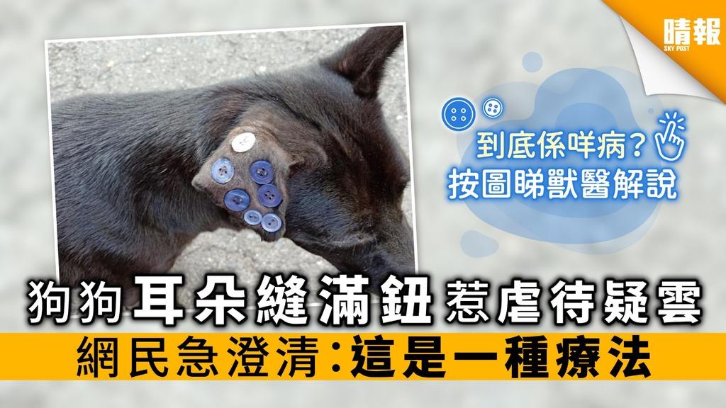 狗狗耳朵縫滿鈕惹虐待疑雲 網民急澄清:這是一種療法