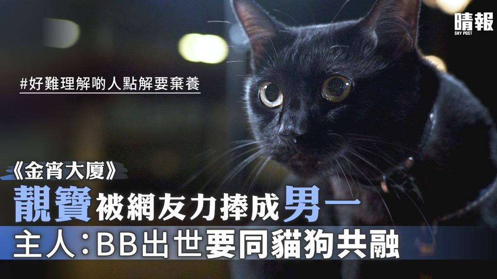 《金宵大廈》靚寶被網友力捧成男一 主人:BB出世要同貓狗共融絕不棄養